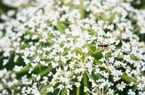 韭菜花和小蚂蚁