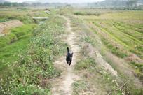 一只黑色的狗在田野里奔跑