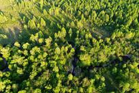 穿越松林弯曲的小溪