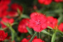 红红色花草