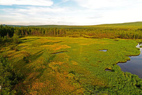 绿色的森林草甸