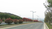 清镇红枫景观道路