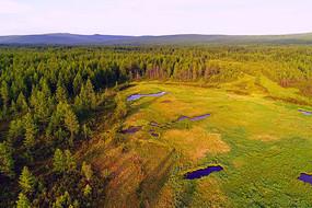 森林湿地景观