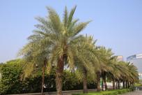 棕榈树林的街道