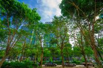 主干道路边的绿化树木