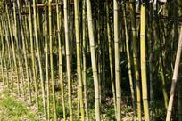 竹林摄影图
