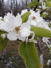 春天的绽放