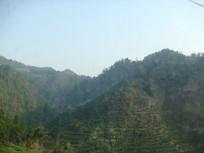 凤凰古城山林