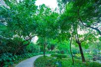 惠州南门公园的小路