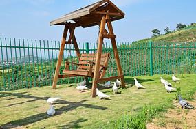 草地上的鸽子