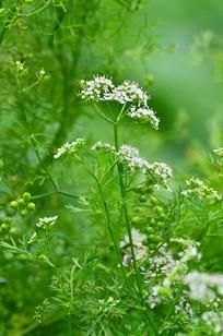 绿色植物背景小花图片