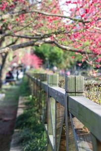 木栏与桃花