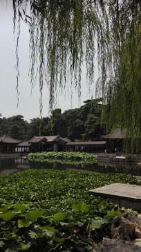中国风荷花池