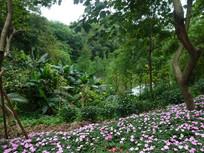 花园风景图片