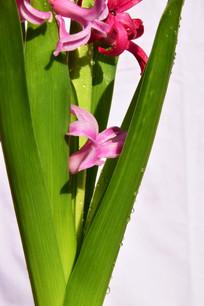 绿叶间的粉色花朵