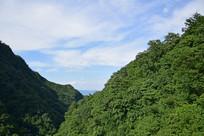茂密的树林山景摄影