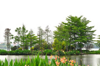 湿地公园风景