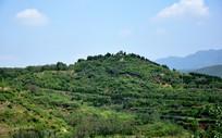 翠绿的山岭植被