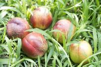 草地上的几个桃子