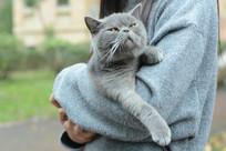 调皮的灰猫