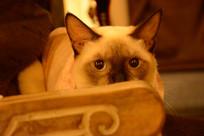 猫咪的凝视