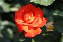 漂亮的鲜花