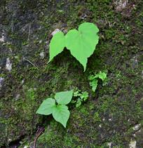 岩石上的青苔和绿草