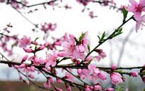 枝头盛开的花朵