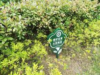 百天茂盛的绿化植物