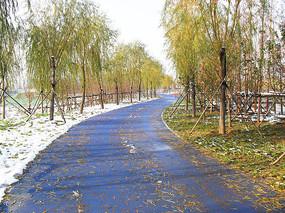 冬季的公园景观