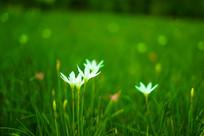 公园里的小白花