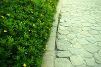 石板路与小花小草