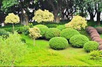 公园花艺风景图片