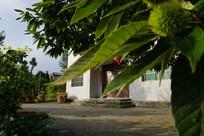 果树干菜小楼房