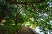 惠州南湖边的小路