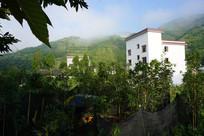 绿色围绕的小楼房