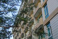 绿树教学楼