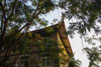 校园建筑楼