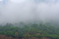 云雾缭绕的太行山植被
