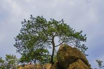 千山老子传道与松树