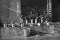 台阶上的花盆