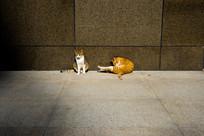 墙角的两只猫