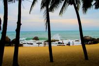 椰树下大海