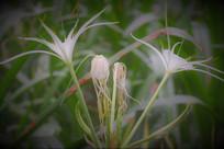大自然美丽植物图片素材