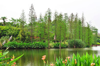 湖边的树木风景图片