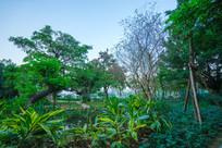 惠州南门公园园林景观