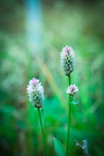大自然的花草
