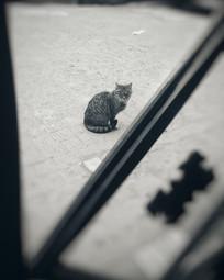 等待的猫咪
