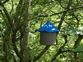 挂在树枝上的鸟笼