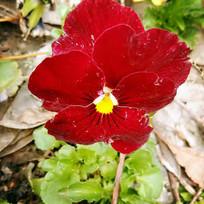 大红色花卉